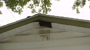 Soffit damage from raccoon